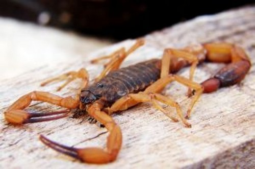 scorpion_2864560.jpg